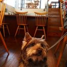 【元町・中華街】愛犬と一緒に!Pancake Ristorante