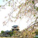 お散歩は「池田城跡公園」で♪
