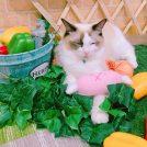 【関内】穴場です。癒されます。関内駅前にある猫カフェにて。