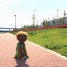 【豊洲】全面開園!レインボーブリッジが見える「ぐるり公園」お散歩詳細ガイド
