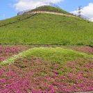 芝桜もきれいな川和富士公園へGO!@都筑ふれあいの丘