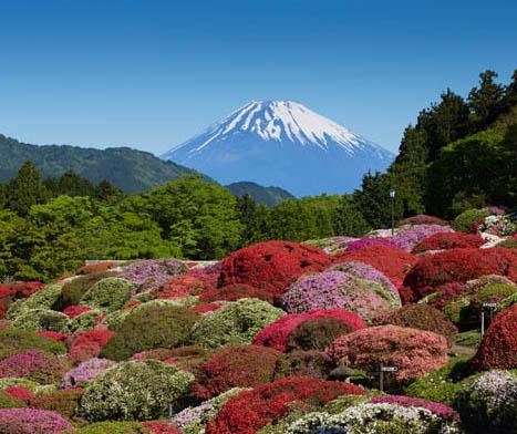 「小田急 山のホテル」のツツジ庭園見学券を5組10人にプレゼント