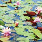 【花カレンダー】わくわくの花めぐりに出かけよう