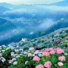 うっとりする色彩美「雨の日を彩る紫陽花たち」