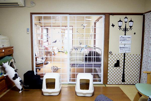 エイズ猫ちゃんの部屋P2220962