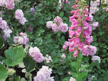 1805_garden