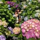 【鹿屋・荒平】斜面いっぱいの紫陽花「アジサイ園・いこいの里園」