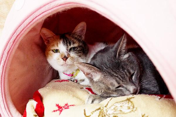 エイズ猫のみきゃんP2220797