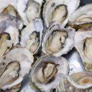 牡蠣のガンガン焼きや豪華な海鮮BBQが食べ飲み放題!名古屋城ビアガーデン