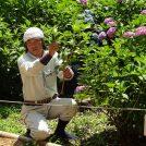 6/22(金)開催「あじさい挿し木教室」であじさいを自宅に♪万博記念公園