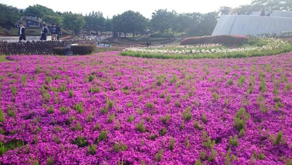 【川崎町】花と緑「国営みちのく湖畔公園」と仙台花火大会、広瀬川花火大会感想