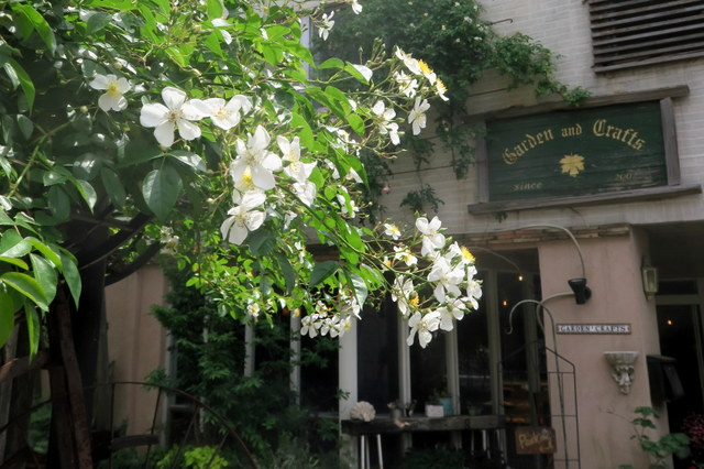 再訪★立川「ガーデン&クラフツ」希少バラのキフツゲートと美味なものと♪