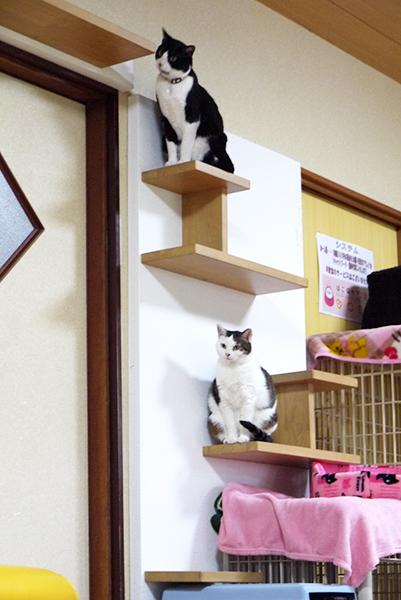 猫の壁P2220947