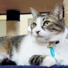 猫に癒されて!保護猫カフェ「ひめねこ」で猫知識を高めよう@松山市東野