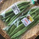 見た目はびっくりだけど味は美味しい!鹿児島の野菜「ビックリジャンボいんげん」