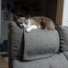 メガネ好きな猫
