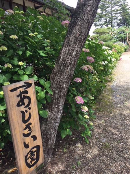 山神社あじさい看板