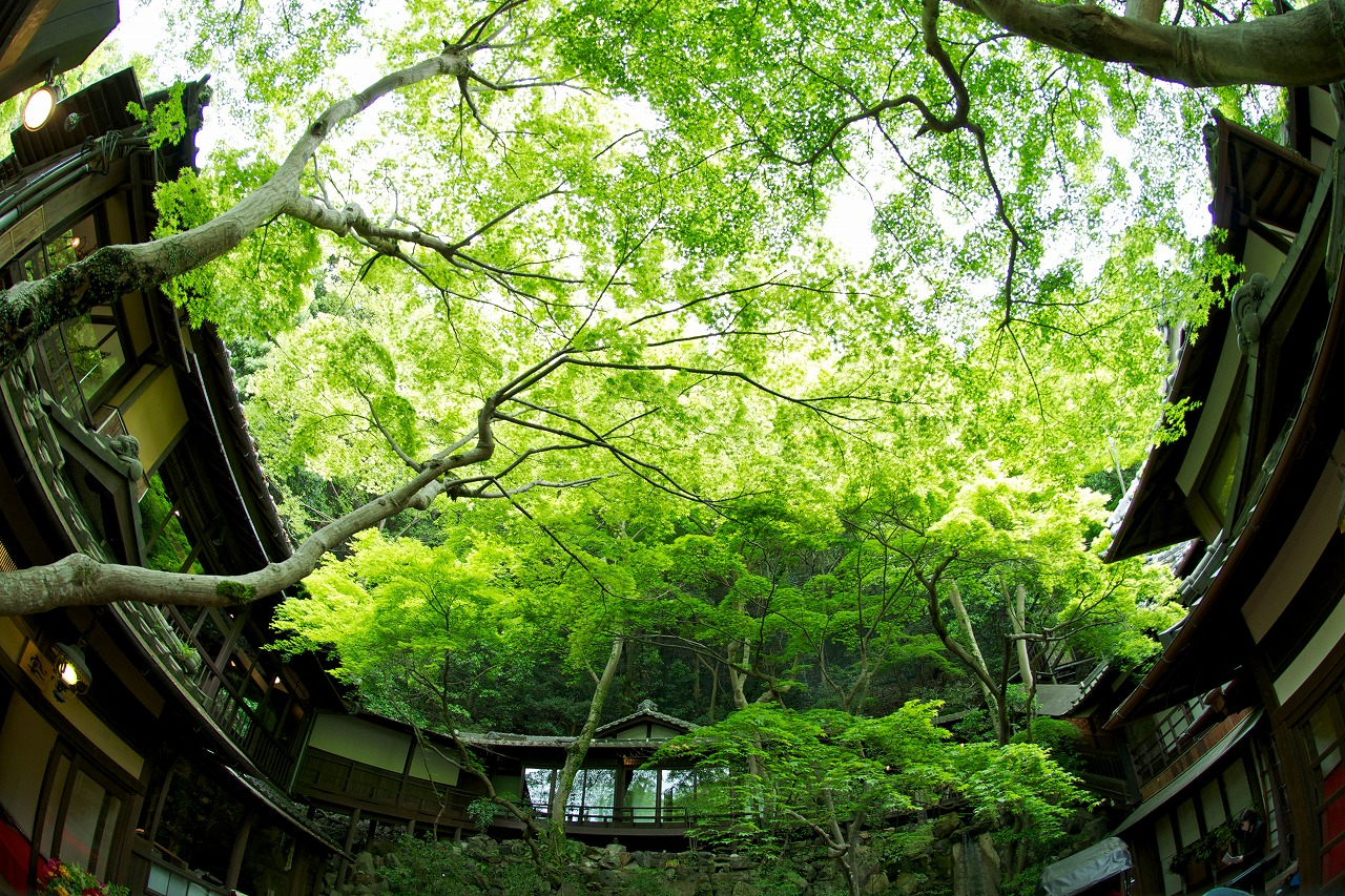 緑豊かな、箕面 音羽山荘