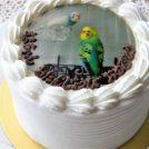 記念日におすすめ、フォトケーキが1300円~。Webで注文OK!鹿児島空港近く「パティスリーアンジュ」
