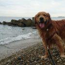 【マリンピア神戸~明石大橋】海を楽しむお散歩コース