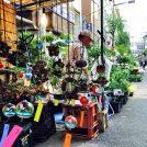 植木好きなら「お富士さんの植木市」へ