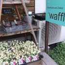 【武岡エリア】子連れで行きたいグリーンと雑貨のお店♪『*waffle*』