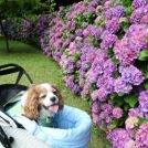パノラマな紫陽花とカエルがお出迎えする「引地川親水公園」@藤沢