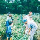 【参加者募集】大人時間プレミアム~夏野菜収穫体験&夏の地酒、リンパケア、認知症予防、整理収納~