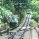あじさい電車に乗って♪@箱根湯本