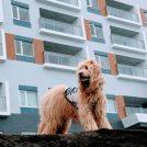 【開店】7/2(月)愛犬と過ごす憧れのホテルが誕生!レジーナリゾート鴨川