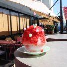 新規オープン・「CAFE SORATOMORI」は土・日・月曜にオープン