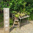 「北中植物商店」三鷹・野川の住宅街で見つけたおしゃれな植物店