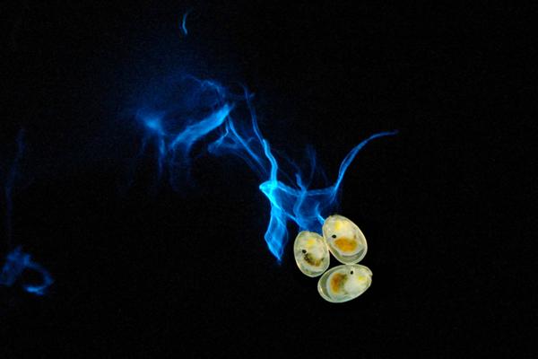 鳥羽水族館_「ナイト営業」:ウミホタル発光実験のイメージ写真(必ずイメージと入れてください)