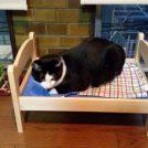 【猫漫画】ボンテンと新しいベッド
