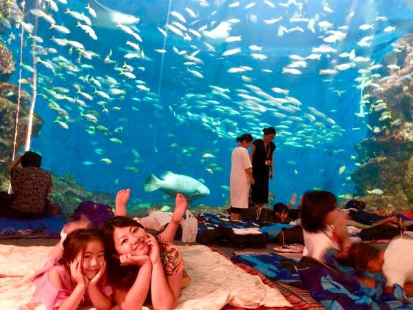 【入場券プレゼント】水族館の大水槽前で魚を見ながらお泊り!@鴨川シーワールド