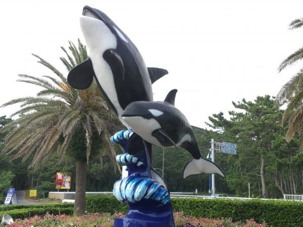 鴨川シーワールドのトロピカルナイトステイで夜の水族館を独り占め!?