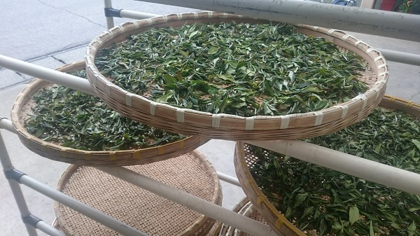 sashima tea