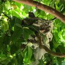 感動!自宅にてヒヨドリが巣立ちました