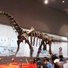 特別展「恐竜ミュージアムinちば」県立中央博物館に実物の全身骨格がやってくる