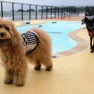 レジーナリゾート鴨川で愛犬のフィットネスを体験!豪華な料理も魅力