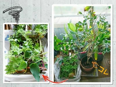新入り植物と避難植物