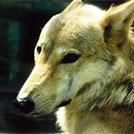 【天王寺】開園時間延長、飼育員による解説など特別プログラムを