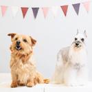 """【国立】評判のトリミングサロンで夏のケアを「Dog Salon Granz &"""" t""""」"""