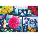 自宅の庭に咲いたチューリップなどの写真を展示。植物で染めた毛糸を使った作品もあります