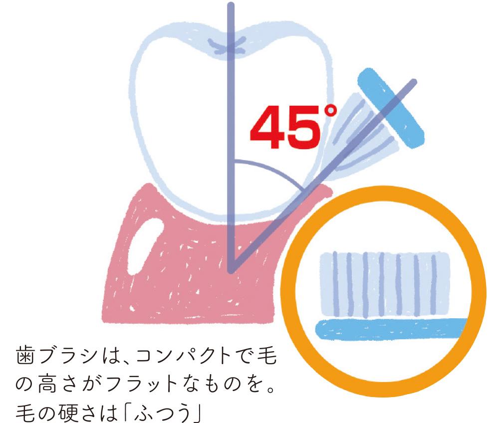 歯ブラシはコンパクトでフラットなタイプを。毛の硬さは「ふつう」