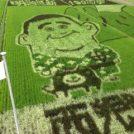南九州市川辺町恒例〝田んぼアート〟2018年は「西郷どん」と「かわなべ牛」