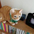 【宮城野区小田原】自宅のようにくつろげる猫カフェ「音々猫(ねねねこ)」