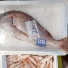 【横浜】第1・3土曜日は、横浜中央卸売市場で新鮮で安いお魚が買えます