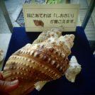 葉山一色海岸の博物館と美術館に行ってきました