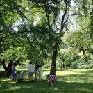 森の教室「セミのぬけがら調査隊!」/大阪市立大学理学部附属植物園